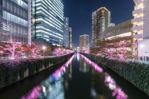 """【終了】""""冬の桜""""満開。「目黒川みんなのイルミネーション2019」開催"""