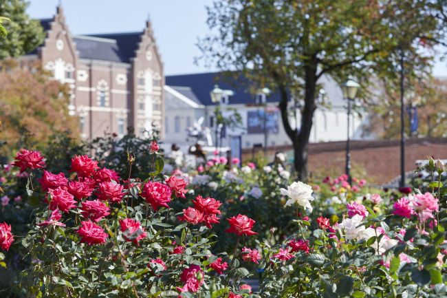 【終了】約1000品種が美しく咲き誇る。ハウステンボスで「秋バラ祭」開催
