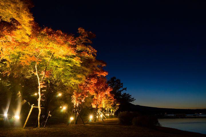 【終了】富士山×紅葉ライトアップ。山中湖「夕焼けの渚・紅葉まつり」開催