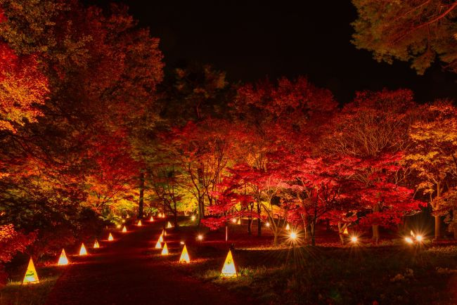 【終了】広大な敷地に広がる絶景。国営武蔵丘陵森林公園で「紅葉見ナイト(もみじみないと)」開催