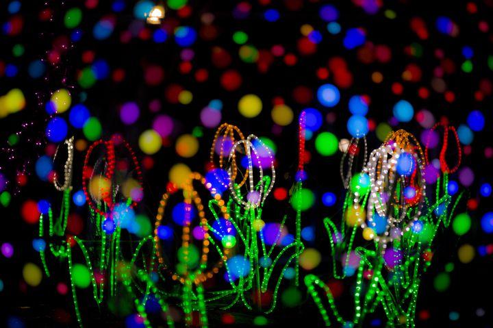 【開催中】10万球が光り輝く。富山で『チューリップ公園KIRAKIRAミッション2019』が今年も開催