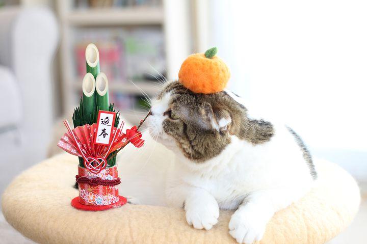 冬らしい癒しの猫が大集結!猫の祭典「ねこ休み展 in 横浜みなとみらい」開催