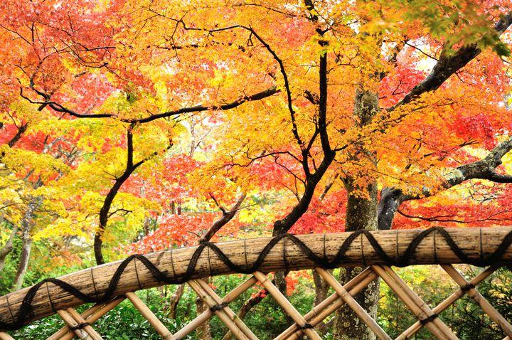 箱根一の紅葉を見逃してない?「箱根美術館」の紅葉が美しすぎる