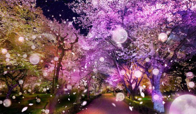 夜桜に酔いしれる。京都・二条城でFLOWERS BY NAKED 2020 −桜− 開催