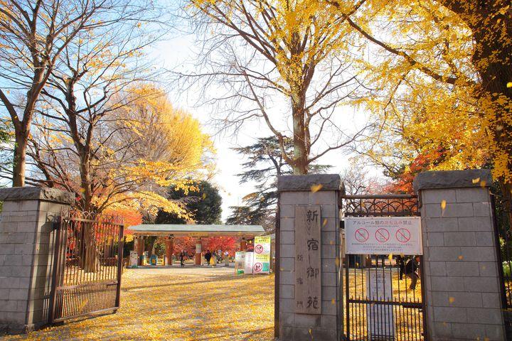 洗練された都会のオアシス!秋の休日は「新宿御苑」の紅葉に癒されよう