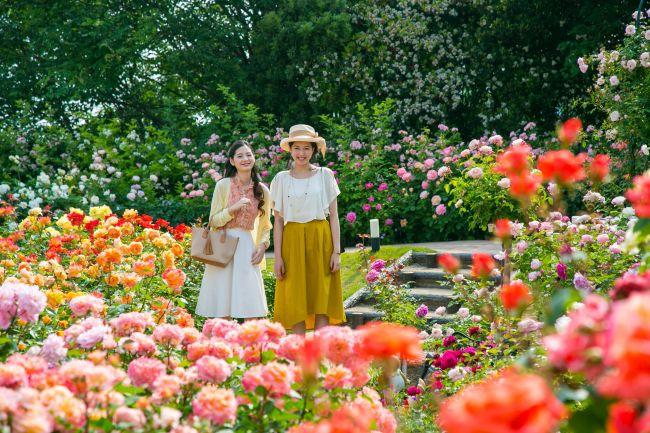 【終了】アジアの遺跡×バラで海外気分!四国最大級の「大バラまつり」開催!