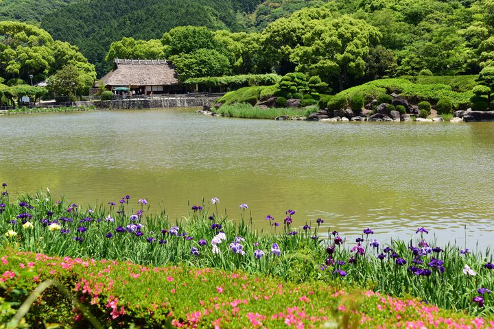 【終了】四国最大級の日本庭園で花菖蒲が咲き誇る。「南楽園花菖蒲まつり」愛媛で開催
