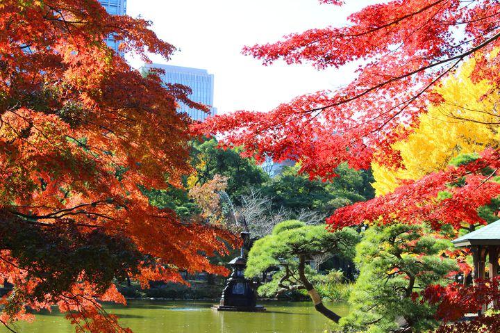 秋のデートスポットは絶対ここ!「日比谷公園」の紅葉がロマンチックすぎる