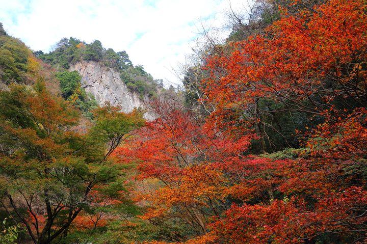 都心からたった60分!自然豊かな「秋川渓谷」の美しき紅葉を見逃すな
