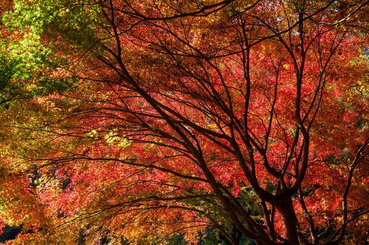 都心から1時間で行く秋の絶景!「高尾山」の美しすぎる紅葉情報まとめ