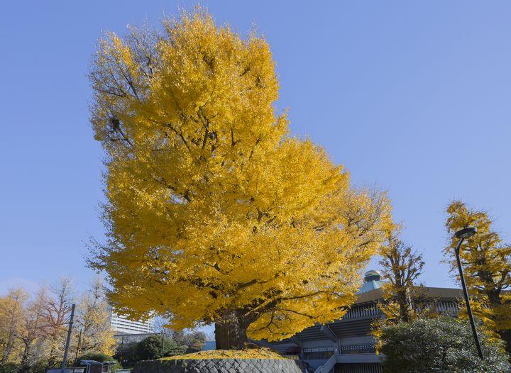 大都会に残された自然。「北の丸公園」の紅葉が絵に描いたように美しい