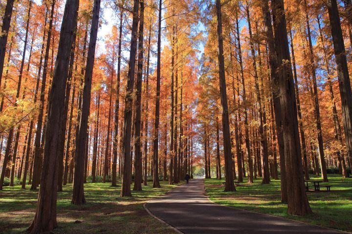 空と紅葉のコントラスト!都立水元公園の「見上げる」紅葉が美しい