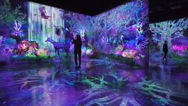 息を飲むデジタル空間。福岡に新ミュージアム「チームラボフォレスト」OPEN