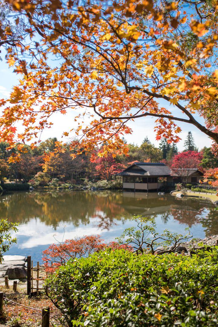 東京の絶景紅葉といえばココ!「国営昭和記念公園」の紅葉はやっぱり美しい