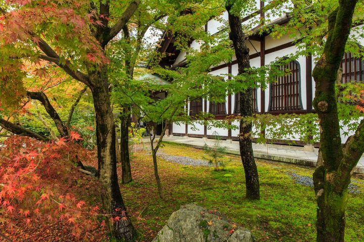 """一歩上の、秋の京都。名所「永観堂」で""""3000本""""の紅葉に感動しよう"""
