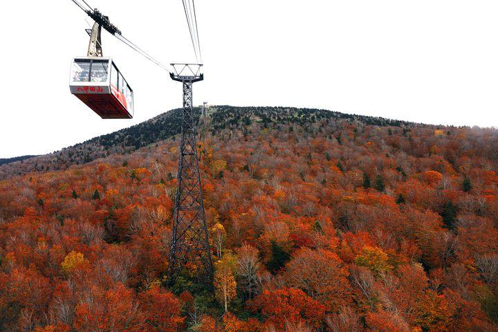 眼下に広がる紅葉の絨毯。青森一の紅葉を楽しむなら八甲田ロープウェイがオススメ