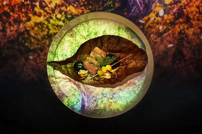 ネイキッドの食×アート。「TREE by NAEKD yoyogi park」にて秋限定コースが登場