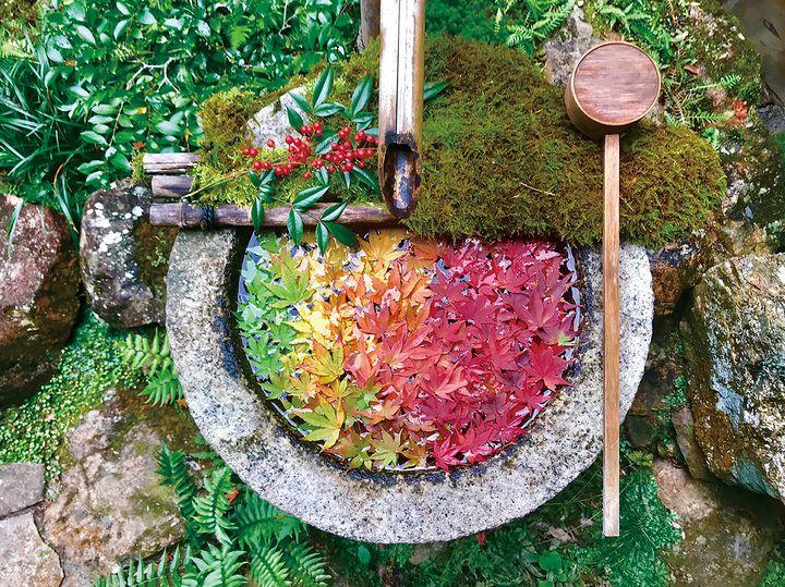【開催中】深まる秋に「紅葉のなないろ花手水」京都・柳谷観音で紅葉イベント開催