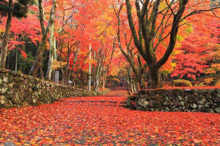 【特集】今すぐ行きたい!紅葉スポット&秋の京都のトレンド情報をご紹介
