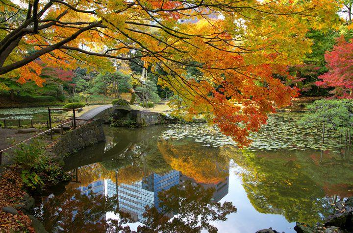 これぞ都会のオアシス!飯田橋「小石川後楽園」の紅葉が美しすぎる