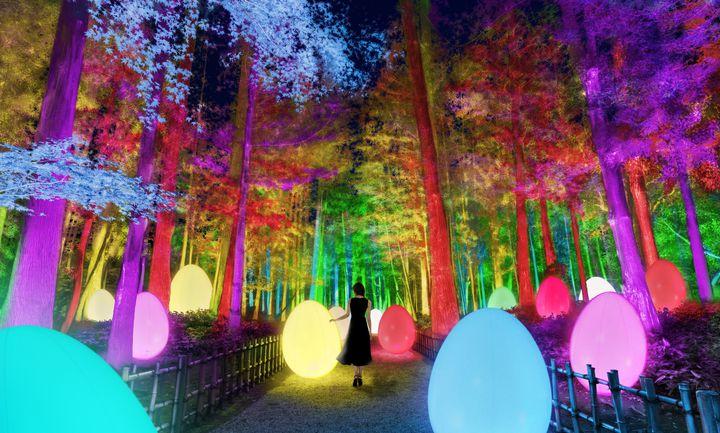 梅×デジタルのアート空間。「チームラボ 偕楽園 光の祭」茨城にて開催