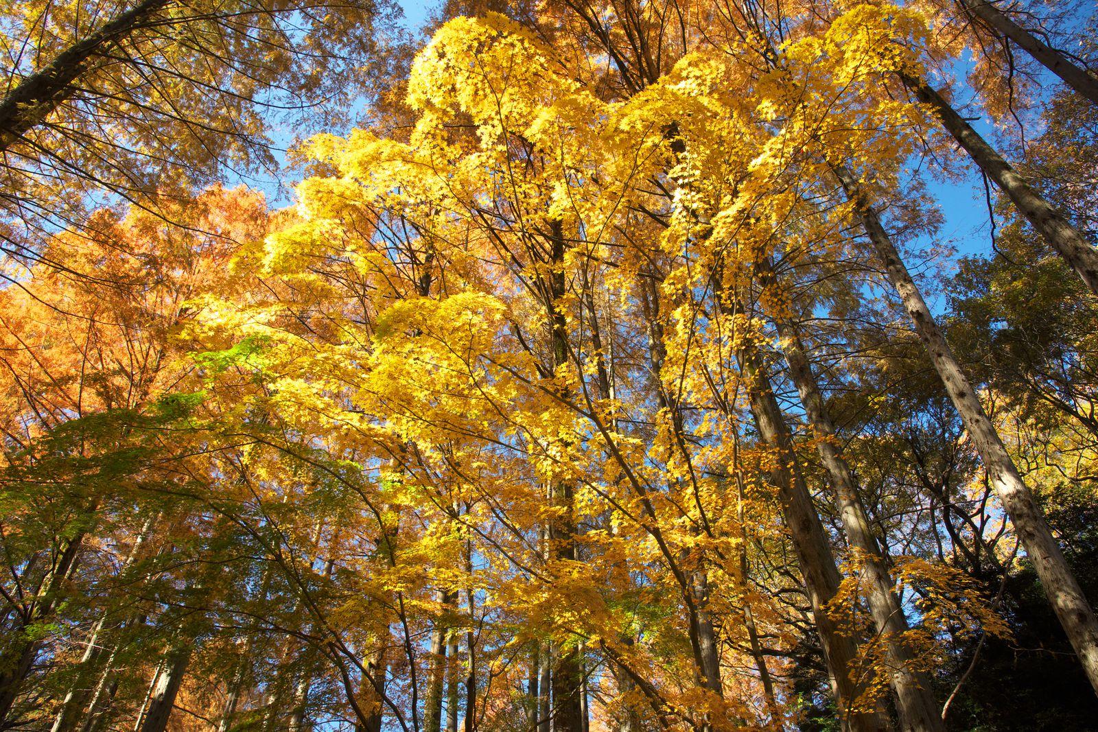 都心からたったの30分!秋の紅葉が美しい都会のオアシス「生田 ...