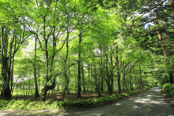 """秋こそ行くべき絶景スポット!長野""""軽井沢""""は紅葉の絶景スポットだった"""