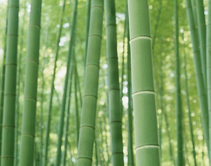 鎌倉一の隠れた名所!美しい紅葉を見るなら「報国寺」が断然おすすめ