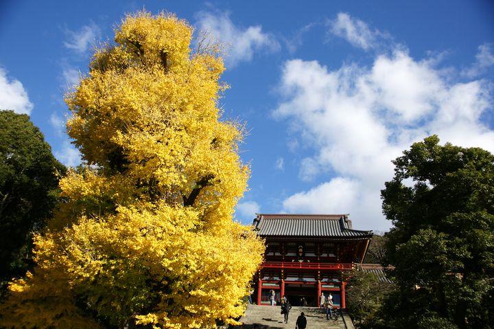 神奈川県が誇る紅葉スポット!「鶴岡八幡宮」の秋の絶景に酔いしれたい