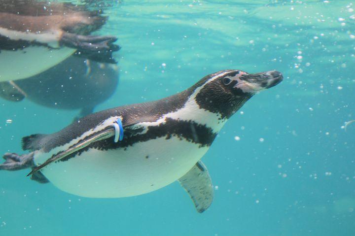 海のすぐ近く!晴れた日に行きたい「葛西臨海水族園」の楽しみ方10選