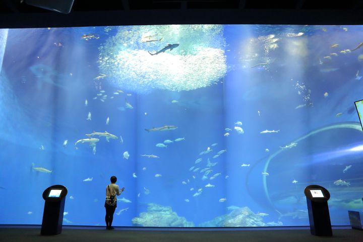 アクアワールド茨城県大洗水族館でしたい7つのこと!大満足間違いなし。