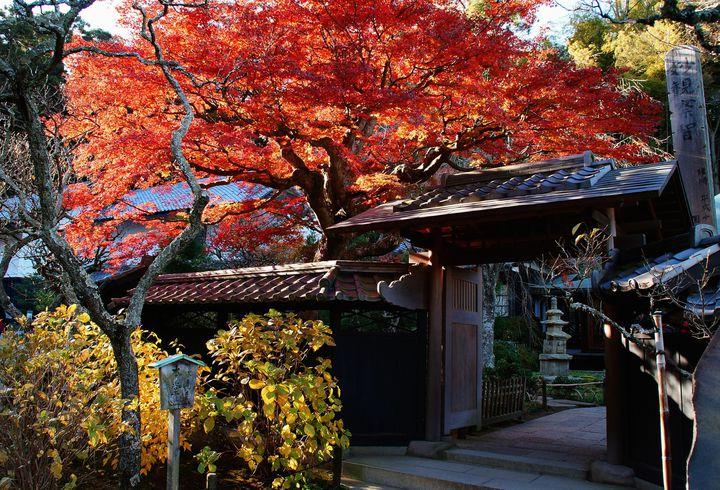 駅からのアクセス抜群!鎌倉屈指の紅葉名所「東慶寺」の魅力とは