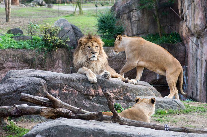 東京都内にあるサファリ!旅行気分になる「多摩動物公園」の楽しみ方10選