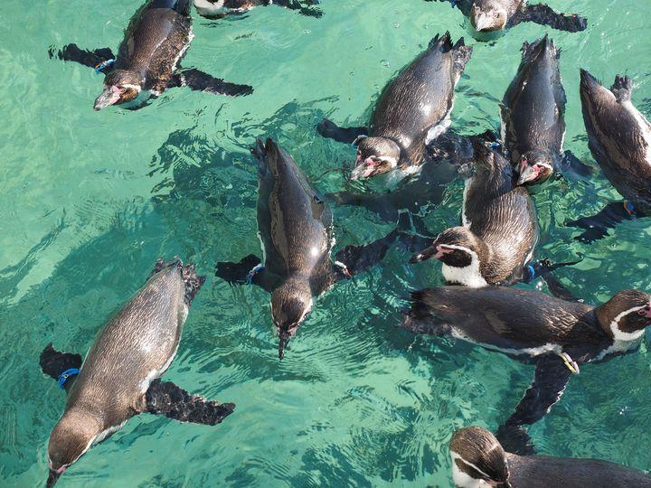 【完全保存版】おすすめ14施設!東京都内の動物園&水族館まとめ