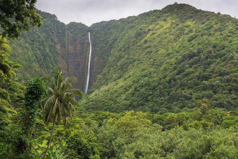 ワイピオは、ハワイ語で「曲がりくねる水」の意味。多くの滝によって貴重な淡水が得られる場所として古来から大切に守られてきました。ガイド付きのツアーでは急な坂をくだり谷底まで降りることもでき、そこではわずかに住まう人たちが大切に守っている果樹やタロイモの畑も見られます。
