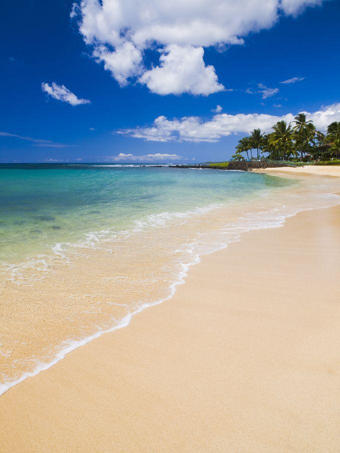 2001年に全米ナンバーワンビーチに選ばれた格式あるビーチ。ビーチではウミガメや、ハワイのみに生息するアザラシ、ハワイアン・モンクシールがのんびりと砂浜で昼寝する姿が見られます。