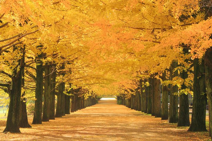 秋のデートは紅葉できまり!東京都内の紅葉デートスポットTOP7