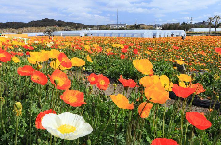 海に自然に見所盛りだくさん!「館山」のおすすめ観光スポット・7選