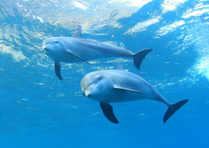 東京でほぼ100%イルカに会える!「御蔵島村」は美しい自然を存分に楽しめる島