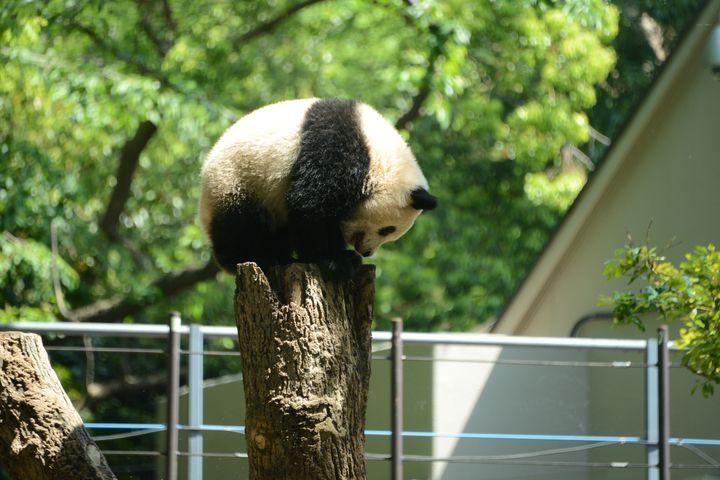 パンダに会おう!東京デートの超定番「上野動物園」の楽しみ方10選