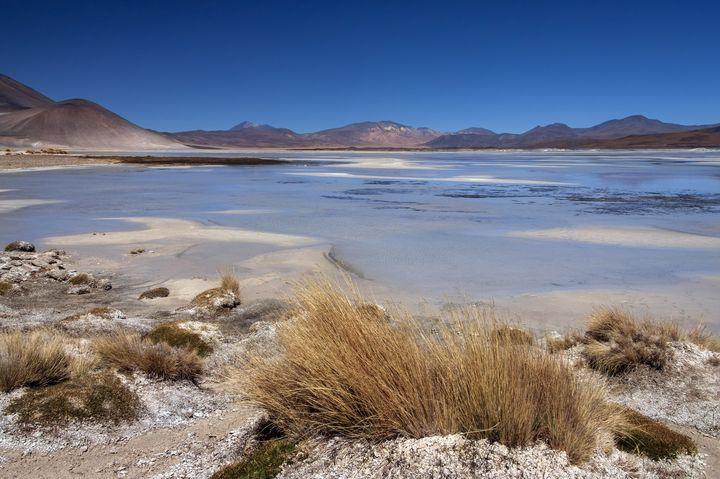 砂漠に起きた奇跡!チリのアタカマ砂漠に花が一斉に吹き乱れた