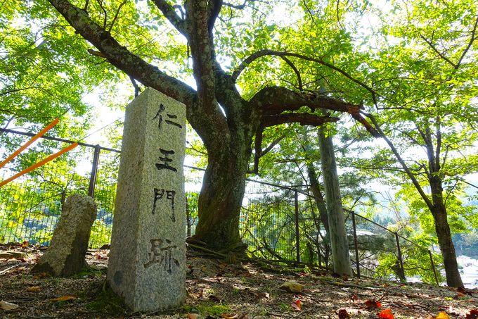 【日本三景 安芸の宮島】宮島 最古の道「山辺の古径」が素敵すぎる!