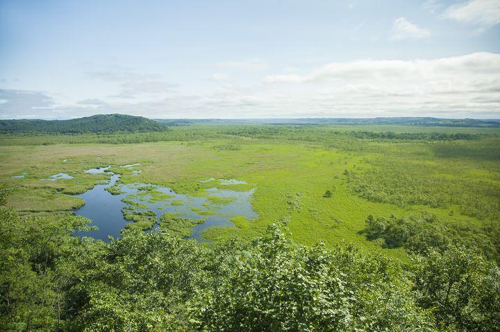 これぞ大自然の宝庫!あなたが北海道・釧路湿原に行くべき5つの理由