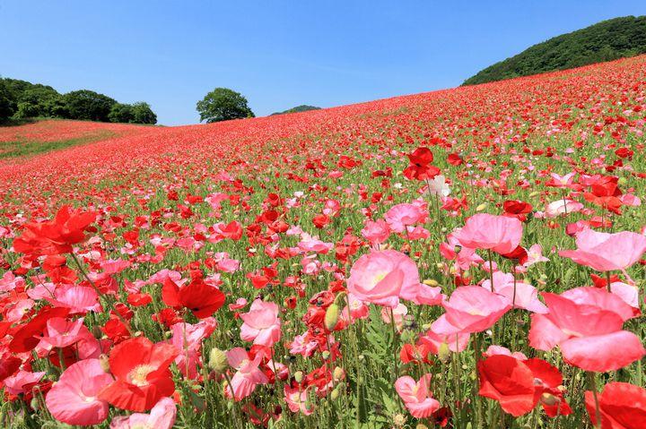 春だからこそ行きたい!関東地方のオススメデートスポット10選