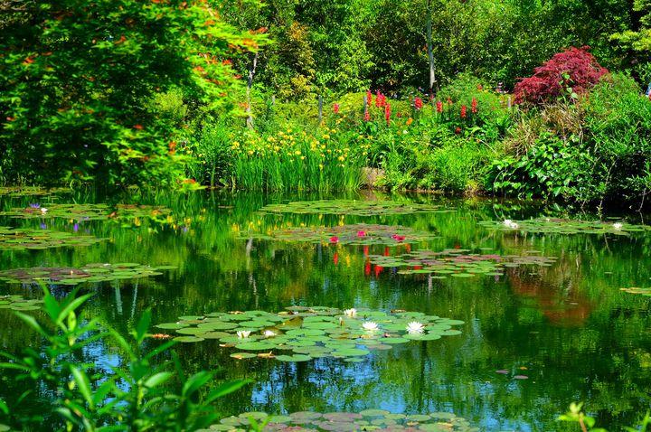 まるでフレンチガーデン。高知県「モネの庭」で花々に癒される。
