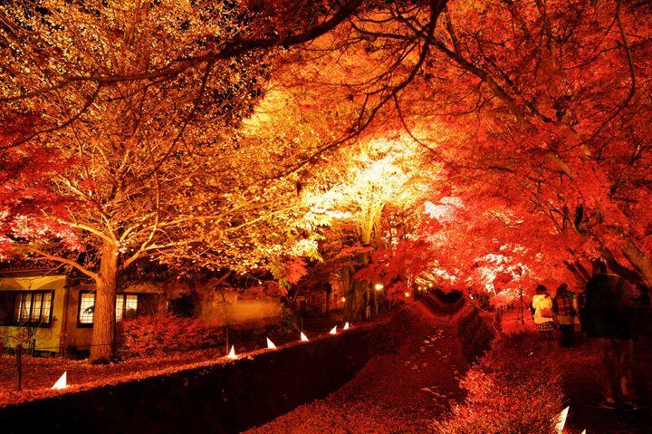 【終了】夜にはライトアップも!「2018富士河口湖紅葉まつり」に行きたい
