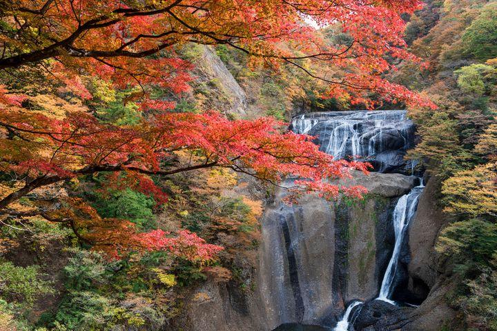 週末に紅葉を見に行こう!東京都内から日帰りで行ける紅葉スポット10選