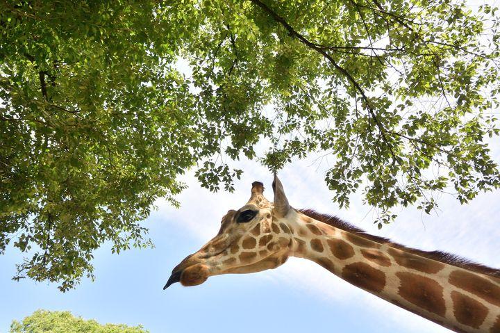 動物たちとたくさん触れ合いたい。栃木県内の人気の動物園5選