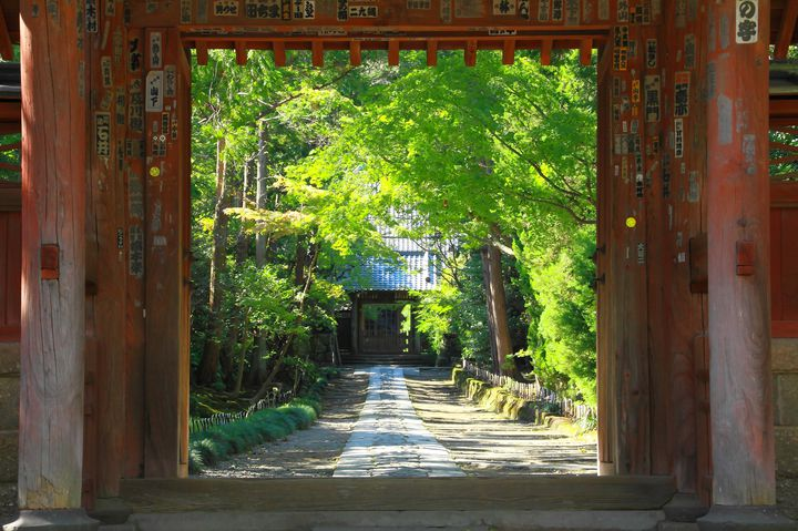 """初夏を彩る紫陽花とともに。「鎌倉五山」を巡る""""1日御朱印集めプラン""""はこれだ"""