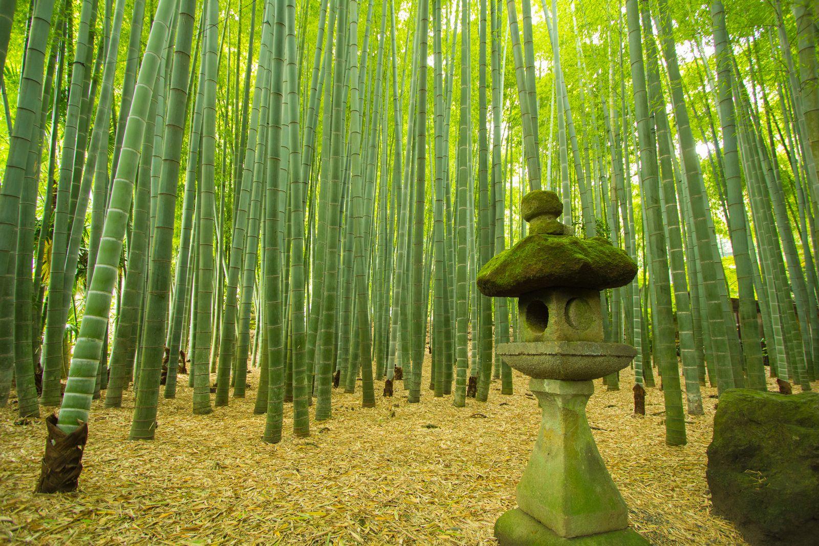 観光で訪れたい人気スポット!鎌倉のおすすめ神社・寺ランキングTOP15 12枚目の画像